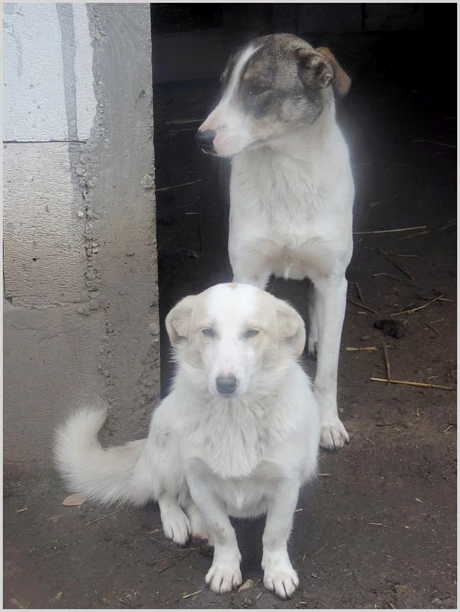 BALANUCH, mâle croisé berger sauvé de Pallady, né en 2009 parrainé par Nathalie G. -Gage Coeur  Myri_Bonnie-SC-R-SOS- Iris_210