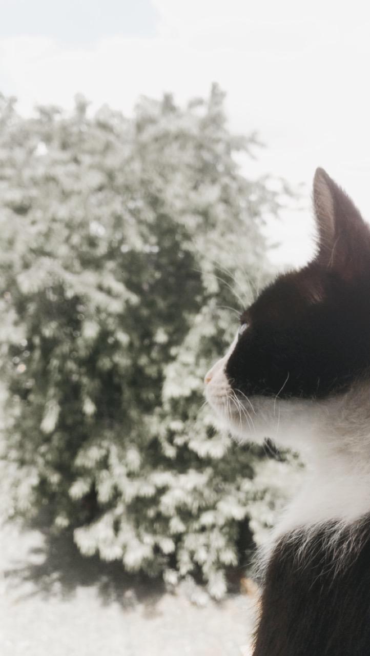 CHARLIE (Kiyo) Image312
