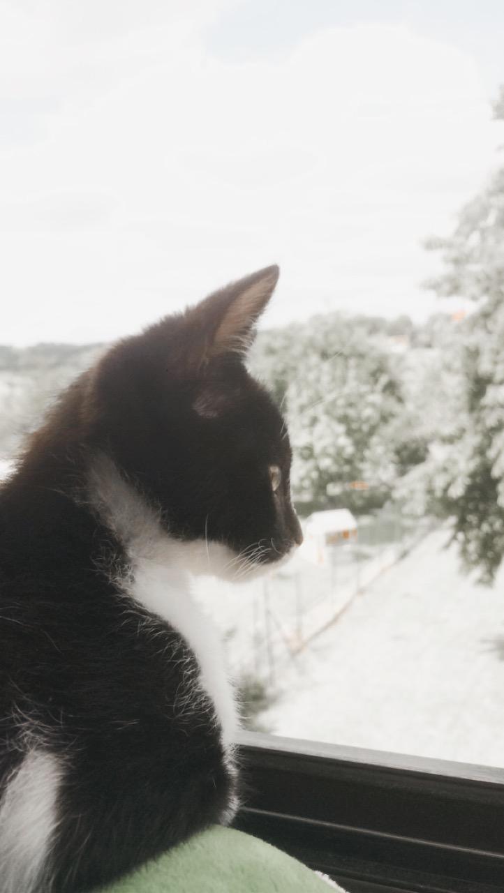 CHARLIE (Kiyo) Image411