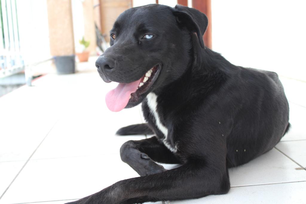 [RÉSOLU] SOS BANJO, adorable chien aux yeux vairons Img_7211