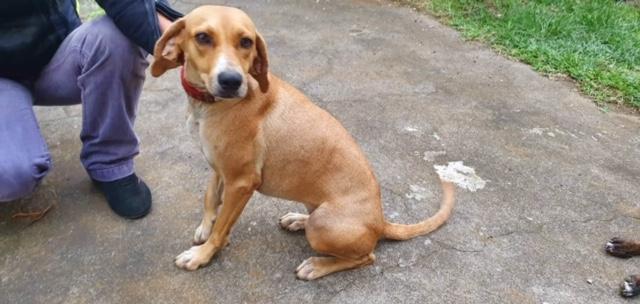 BELOUVE, chienne de 2 ans - marrainée par Maud - réservée par Virginie Img_9712
