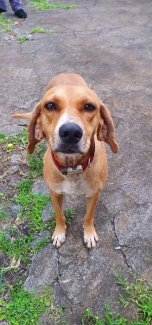 BELOUVE, chienne de 2 ans - marrainée par Maud - réservée par Virginie Img_9713