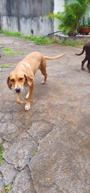 BELOUVE, chienne de 2 ans - marrainée par Maud - réservée par Virginie Img_9714