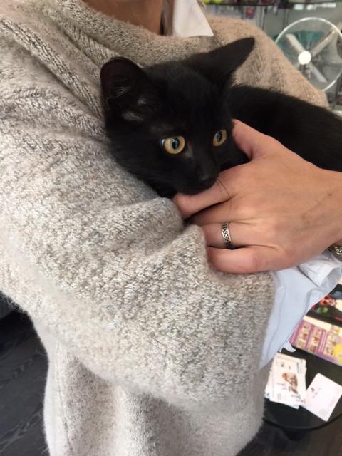 SOS pour un nouveau chat abandonné qui a trouvé une nouvelle famille Unknow21