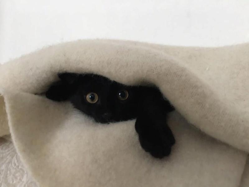 SOS pour un nouveau chat abandonné qui a trouvé une nouvelle famille Unknow23
