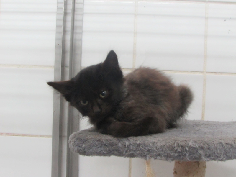 KITTY dite ISIS 00423