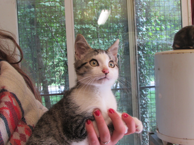 ADOPTION DE PINKI dit TIMON 01623