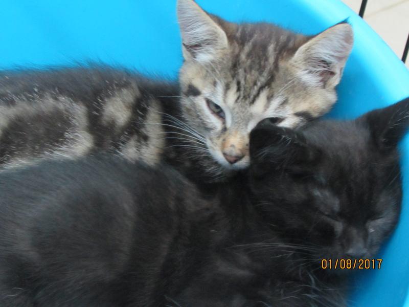 MOJITO et KARLEY 03515