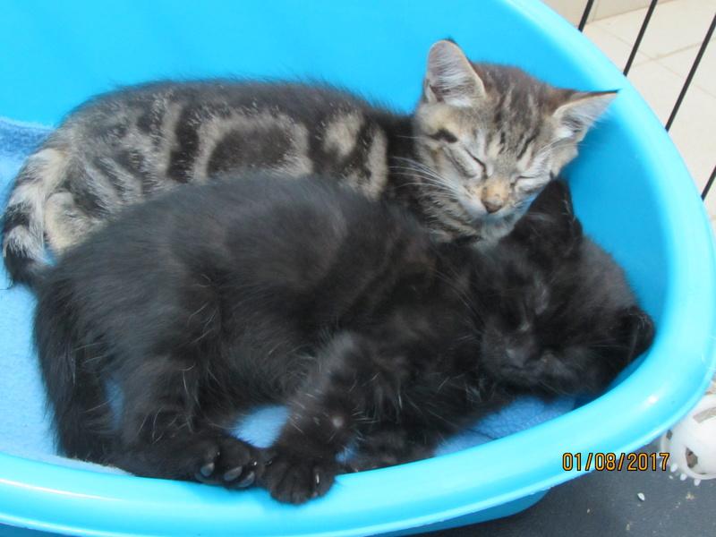 MOJITO et KARLEY 03615