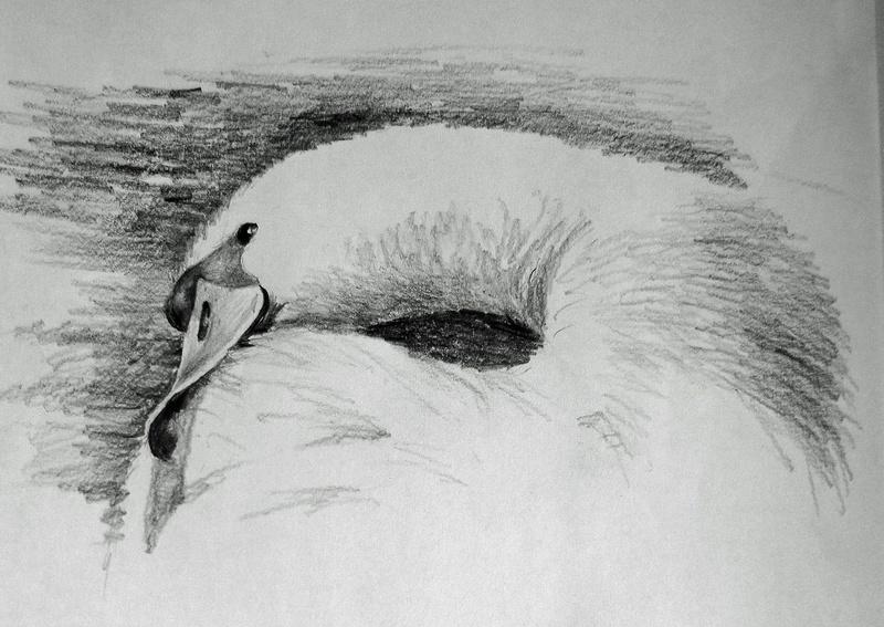 Drawings Liz_pe10