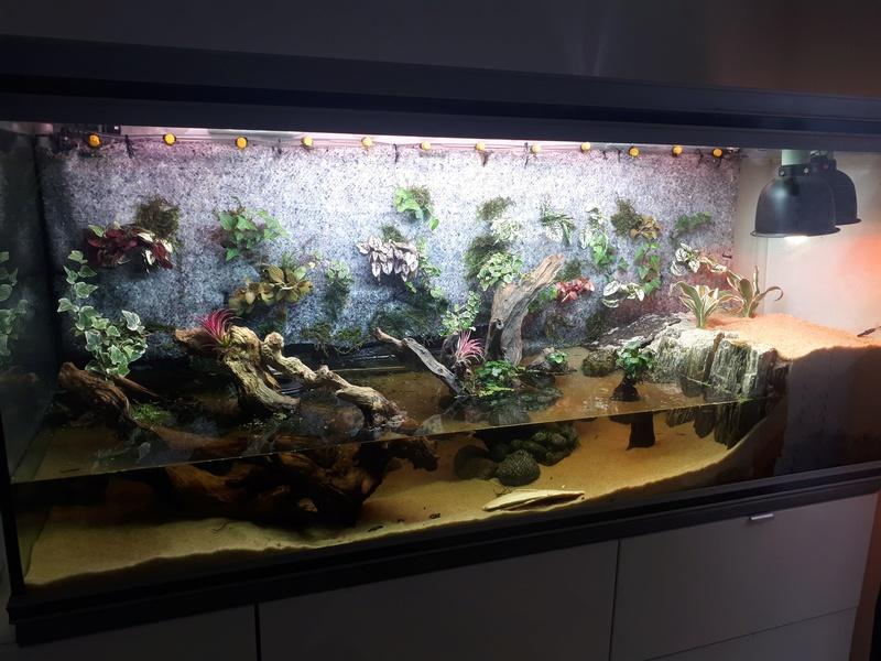 """""""Petit"""" mur dans un aquarium 20170923"""