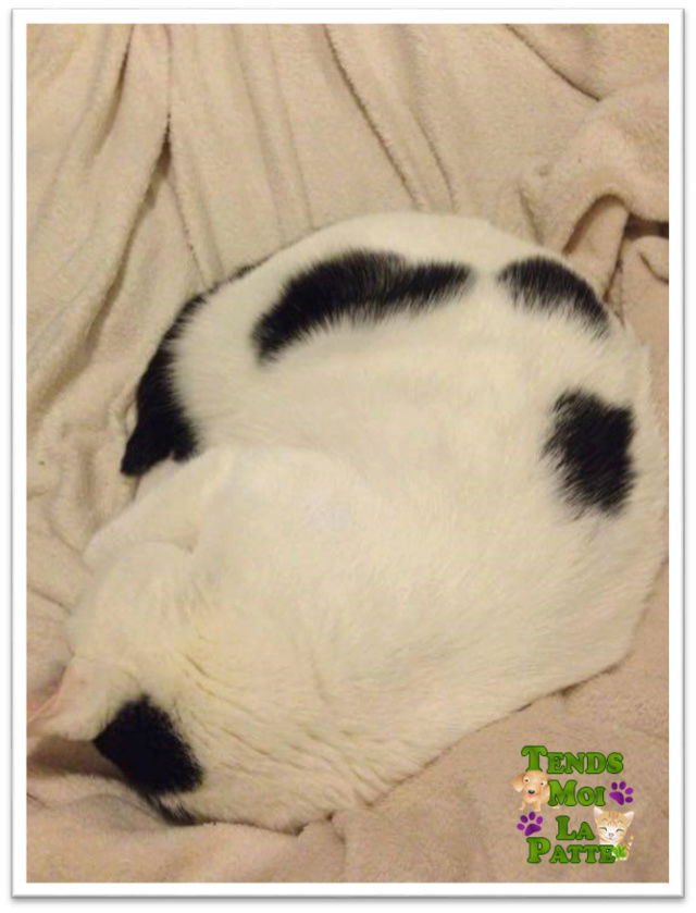 CHAT A ADOPTER : HALLY - chat mâle de 5 ans - Page 2 Hally_10