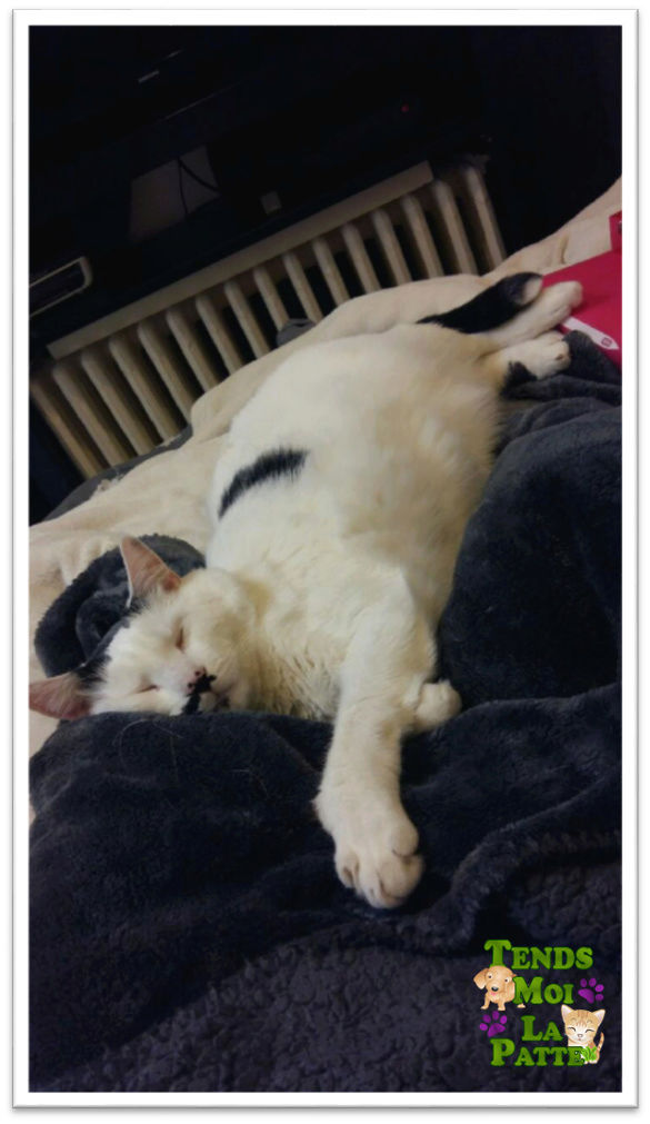 CHAT A ADOPTER : HALLY - chat mâle de 5 ans - Page 2 Hally_11