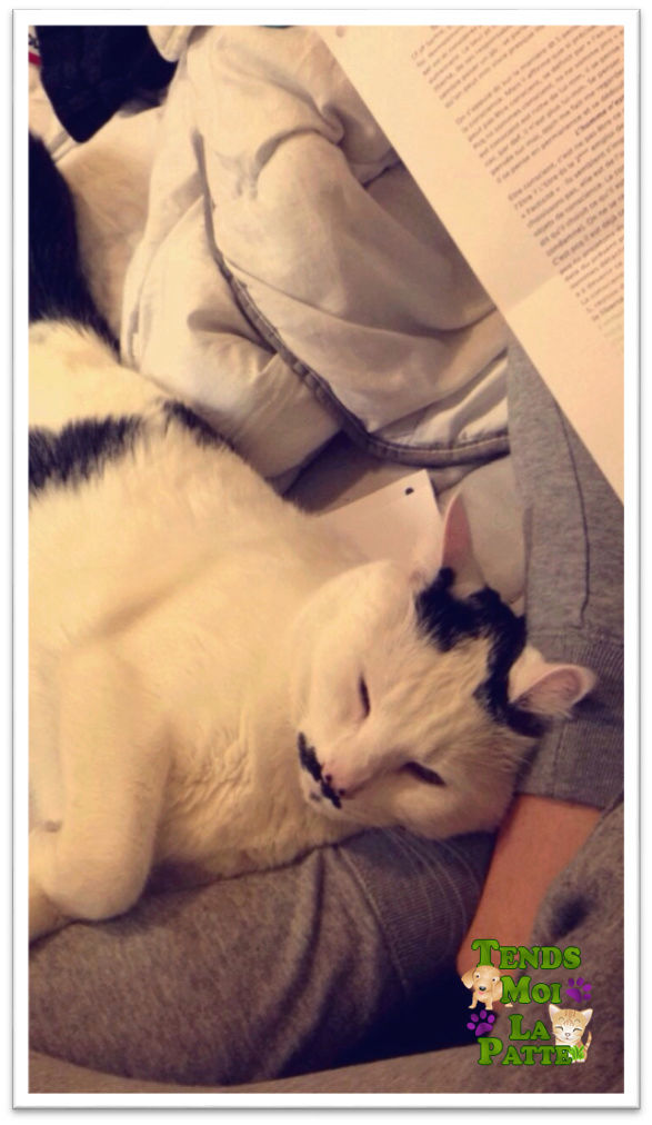 CHAT A ADOPTER : HALLY - chat mâle de 5 ans - Page 2 Hally_12