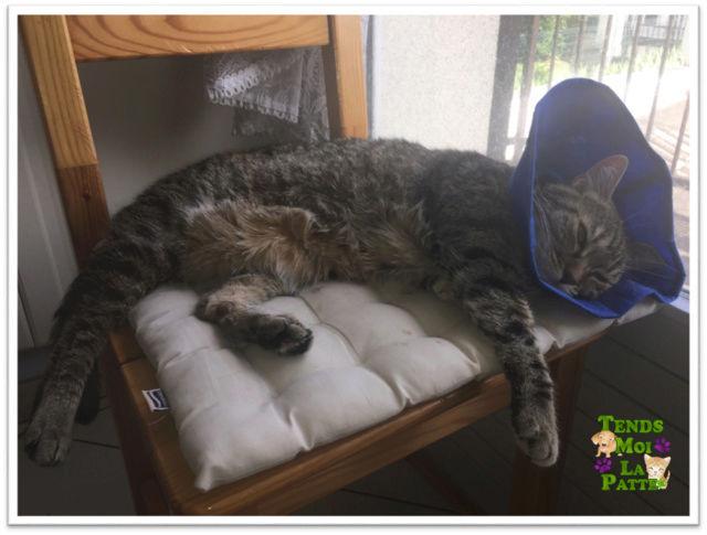 ZINA chatte tigrée de 11 ans Zina_c10
