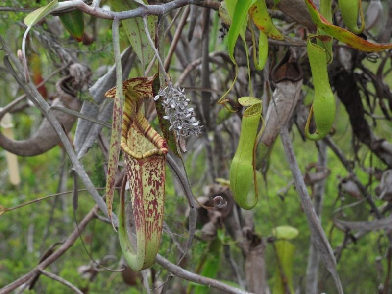 Sarawak, Bornéo Img_2512