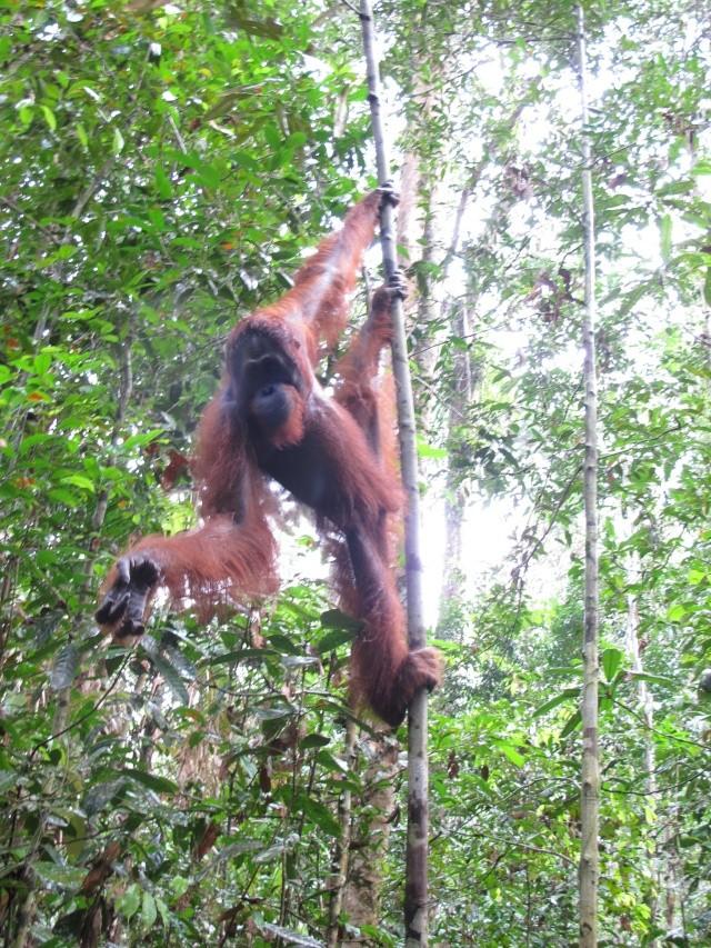 Sarawak, Bornéo... Wow! Img_2910