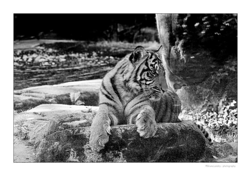 Zoo de la Boissière du Doré Dscf2615