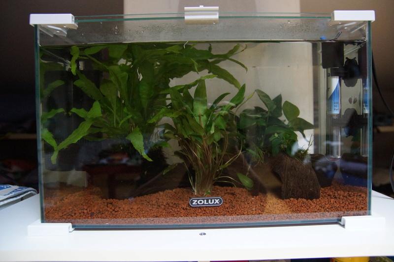Aquarium 20L Dsc01611