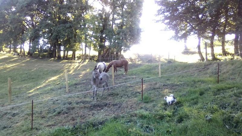BOURIQUET - ONC âne né en 2009 - adopté en août 2017 par Marie - Page 2 Bouriq11