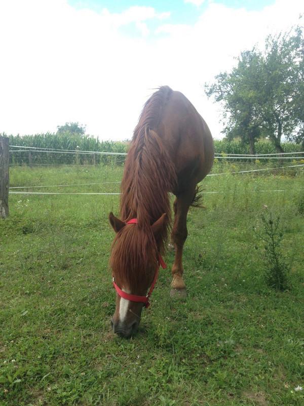 HOUBLI - OI poney né en 1995 - adopté en mai 2014 par Gaëlle Houbli11