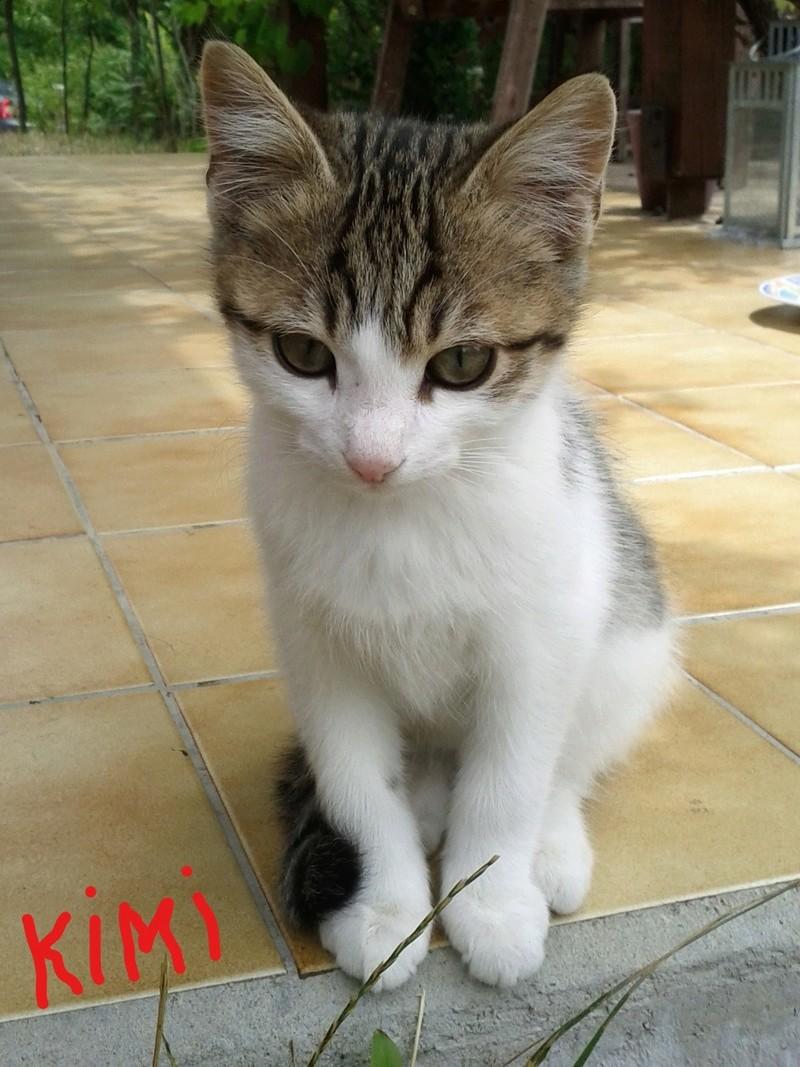 Adoption Kimi_210