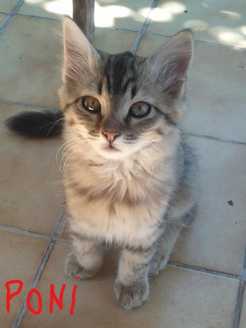 Adoption Poni_l11