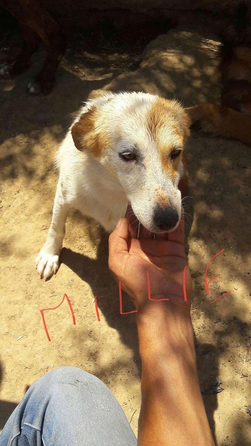 MILLIE, identifiée 788.269.100.002.095, en pension à Tunis Millie10