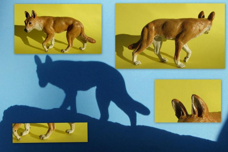Great dingo male by new Australian brand Southlands  2017-045