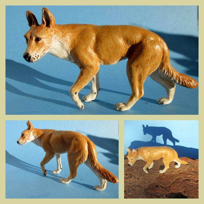 Great dingo male by new Australian brand Southlands  2017-046