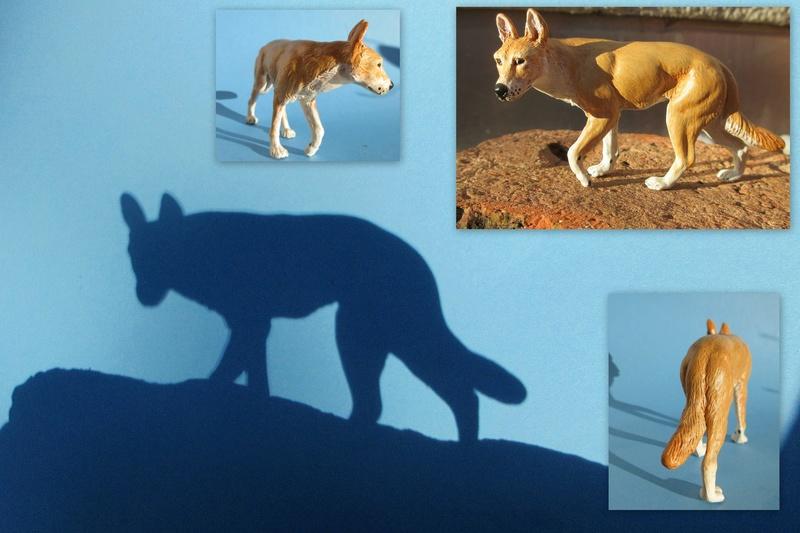 Great dingo male by new Australian brand Southlands  2017-047