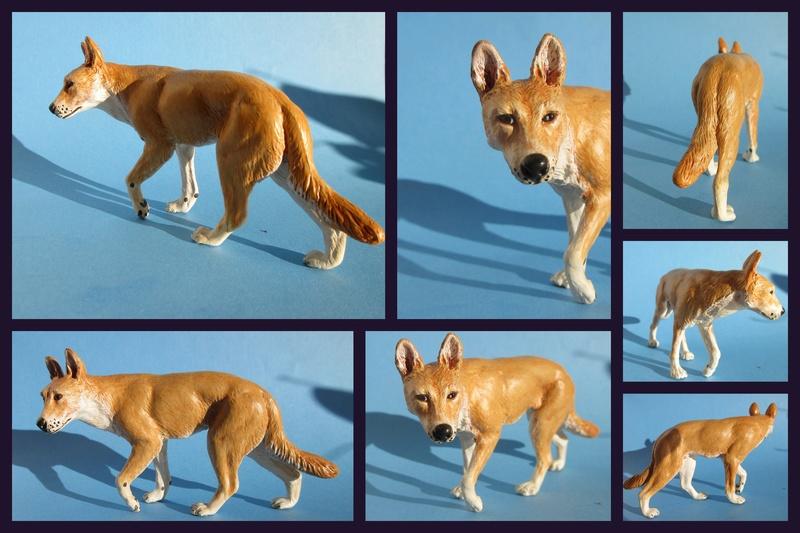 Great dingo male by new Australian brand Southlands  2017-048