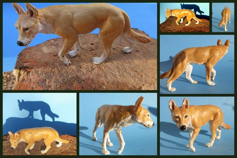 Great dingo male by new Australian brand Southlands  2017-049
