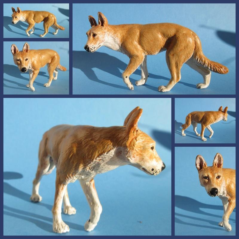 Great dingo male by new Australian brand Southlands  2017-050