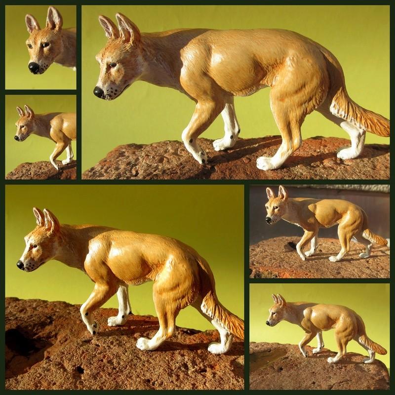 Great dingo male by new Australian brand Southlands  2017-051