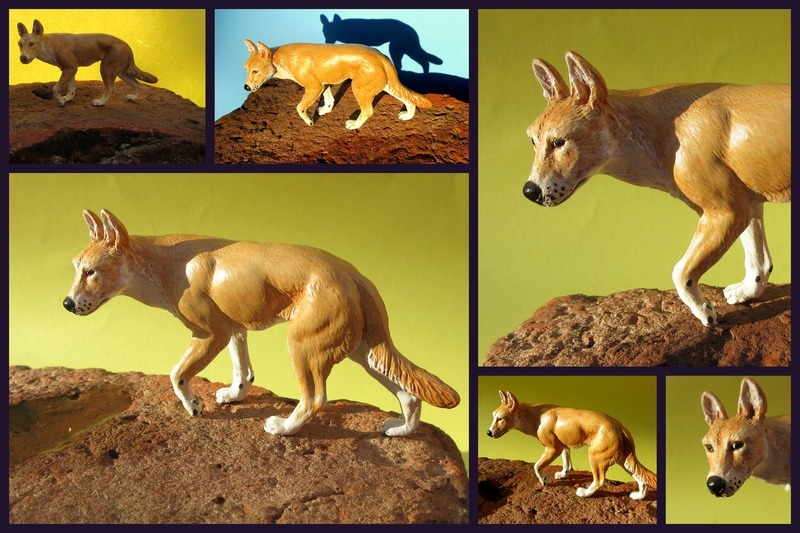 Great dingo male by new Australian brand Southlands  2017-052