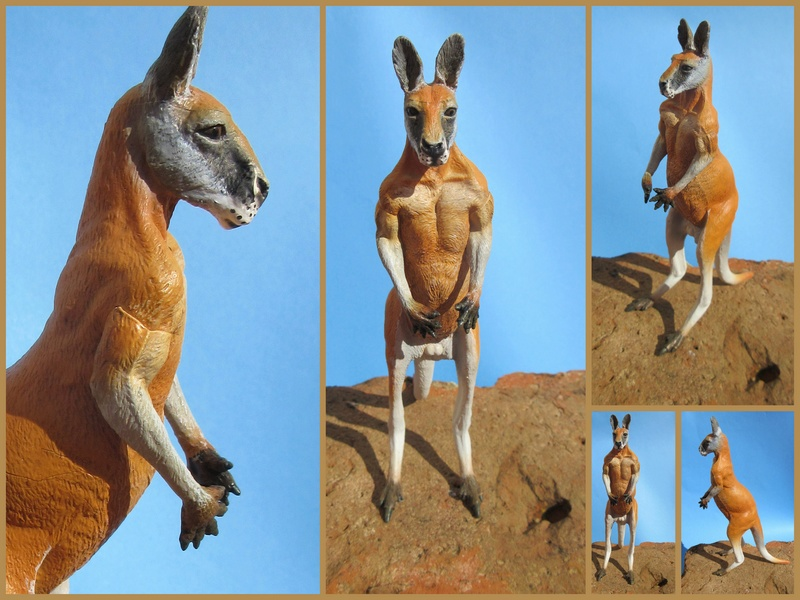 Great Red Kangaroo standing by Southlands 2017-056