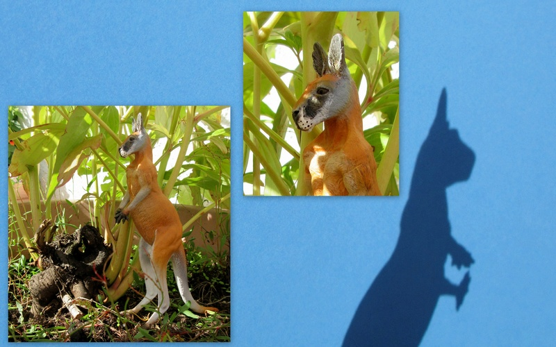 Great Red Kangaroo standing by Southlands 2017-059