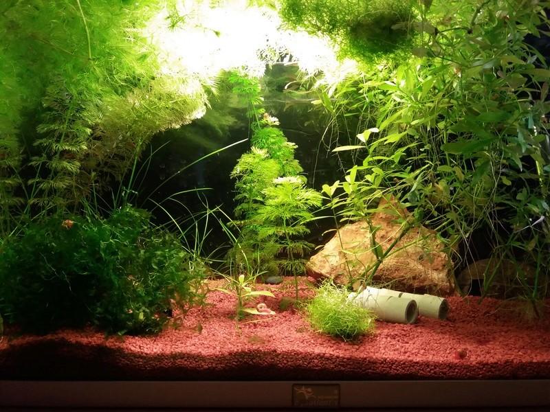 Suivi de mes aquariums de 10L/20L/50L 110