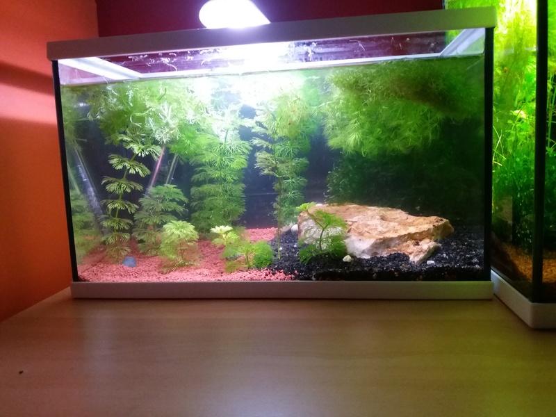 Suivi de mes aquariums de 10L/20L/50L 310