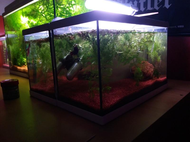 Suivi de mes aquariums de 10L/20L/50L 410
