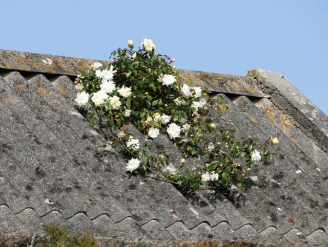 """Concours """"photos insolites naturelles dans votre jardin"""" - les votes Albyri10"""
