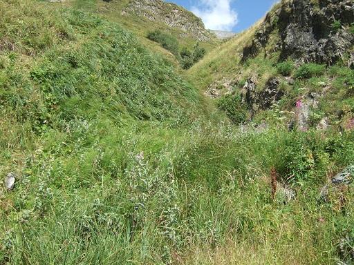 Mentha longifolia - menthe à feuille longue  Dscf0310