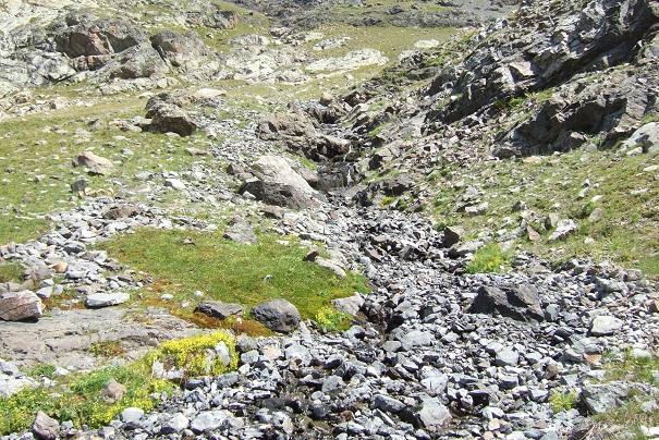 Saxifraga aizoides - saxifrage faux orpin Dscf2228