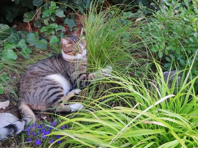 """Concours """"photos insolites naturelles dans votre jardin"""" - les votes Img_6610"""