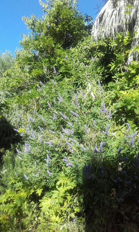 c'est chouette l'été au jardin ! Rps20126