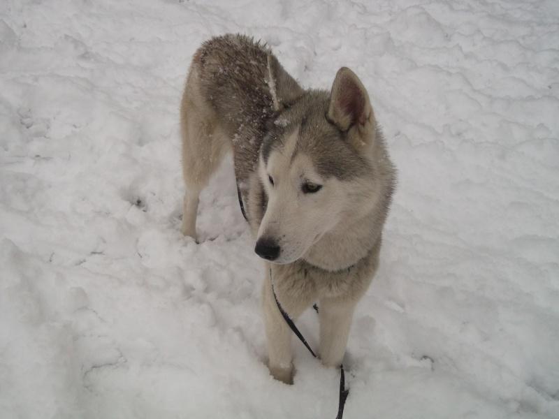 Sous la neige ! Dscf0811