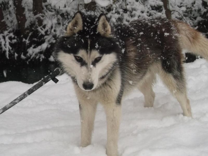 Sous la neige ! Dscf0812