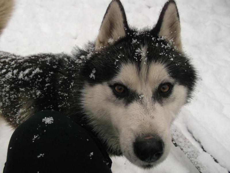 Sous la neige ! Dscf0814