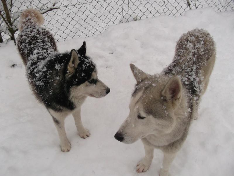 Sous la neige ! Dscf0815